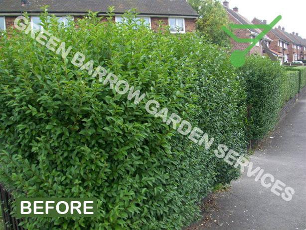 Garden Services, Privet Hedge Trimming - Privet Hedge Trimming before