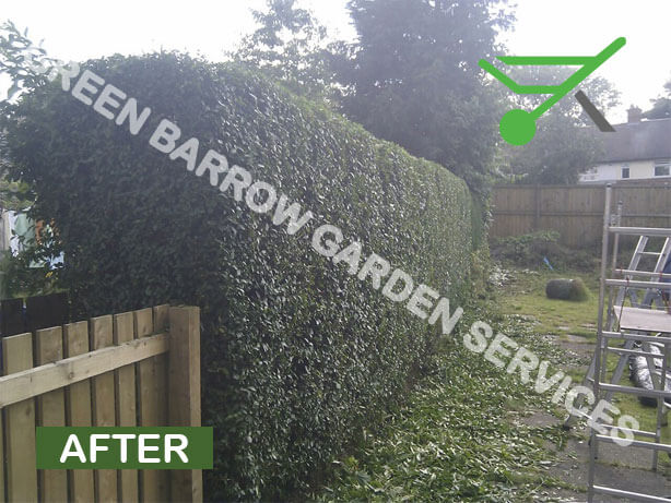 Privet hedge trimming, Greenhill, Sheffield after photo.